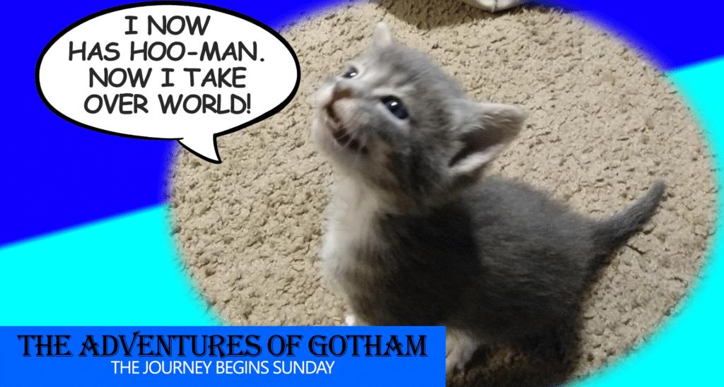 gotham kittie